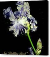 Babbling Brook Iris  Canvas Print