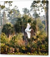 Babcock Wilderness Ranch - Gliding Great Egret Canvas Print