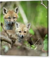 Babes In The Woods Canvas Print