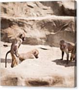 Baboons Monkeys Having Sex Canvas Print