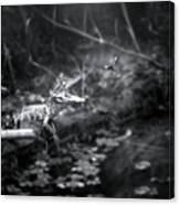 Baby Alligator Vs Mud Wasp Canvas Print