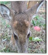 Baby Backyard Button Buck Canvas Print