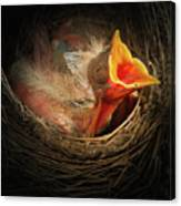 Baby Bird In The Nest With Mouth Open Canvas Print