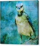 Baby Blue Jay Canvas Print