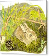 Baby Bunny Down For The Night Canvas Print