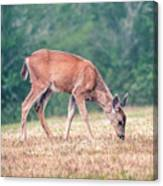 Baby Deer Walking On Grass By Forest Canvas Print