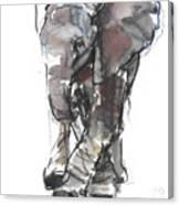 Baby Elephant Study Canvas Print