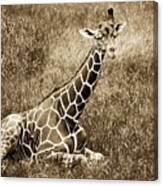 Baby Giraffe In Grasses Canvas Print