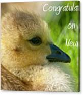 Baby Goose Card Canvas Print