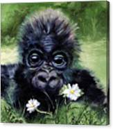Baby Gorilla With Daisies Canvas Print