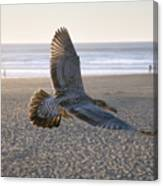 Baby Gull At Dusk Canvas Print