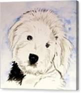 Baby Higgins Canvas Print