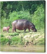 Baby Hippo 1 Canvas Print