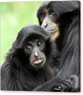 Baby Monkey And Mother Canvas Print