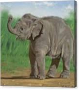 Baby Pathi Harn Canvas Print