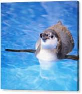 Baby Penguin Floating Canvas Print