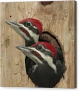 Baby Pileated Woodpeckers Peer Canvas Print