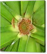 Baby Pinapple Canvas Print