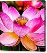 Baby Pink Lotus Canvas Print