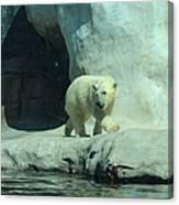 Baby Polar Bear Canvas Print