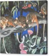Baby Possums Canvas Print
