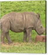 Baby Rhino Chilling Canvas Print
