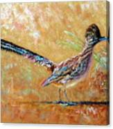 Baby Roadrunner Canvas Print