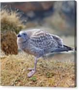 Baby Seagull by Randy Harris
