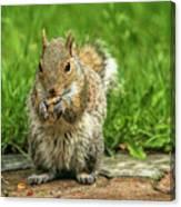Baby Squirrel's First Peanut Canvas Print
