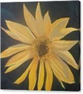 Baby Sunflower Canvas Print