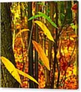 Baby Tree Foliage Canvas Print