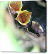 Baby Wrens In The Flowers 338 Canvas Print