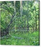 Back In Time In Florida Canvas Print