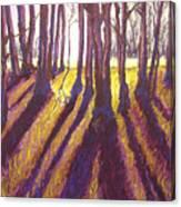 Back Lit Field Canvas Print