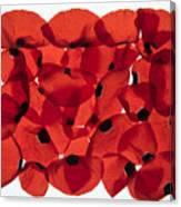 Back Lit Flower Petals  Canvas Print