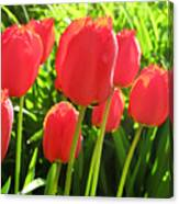 Back Lit Tulips 2 Canvas Print