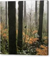 Backlit Bracken Ferns Canvas Print