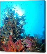 Backlit Coral Canvas Print