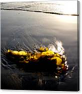 Backlit Kelp Canvas Print