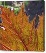 Backlit Leaf 2 Canvas Print