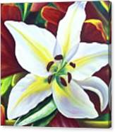 Backlit Lilly Canvas Print