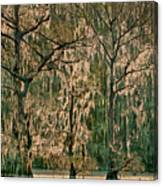 Backlit Moss-covered Trees Caddo Lake Texas Canvas Print