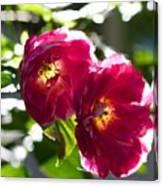 Backlit Roses Canvas Print