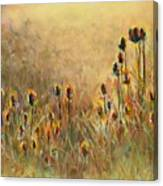 Backlit Thistle Canvas Print
