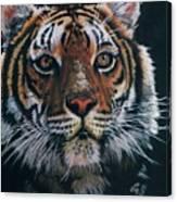 Backlit Tiger Canvas Print