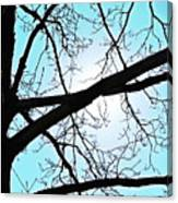 Backlit Tree Canvas Print