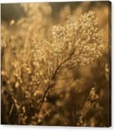Backlit Wildflower Seeds In Autumn Canvas Print
