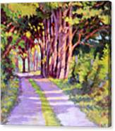 Backroad Canopy Canvas Print