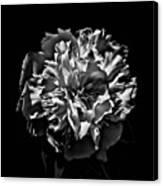 Backyard Flower. Spring Has Sprung (i Canvas Print