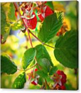 Backyard Garden Series - Sunlight On Raspberries Canvas Print